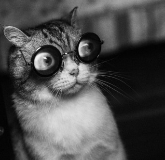 cats-with-glasses10
