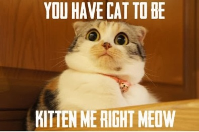 funny-cats-being-scared-21-free-wallpaper